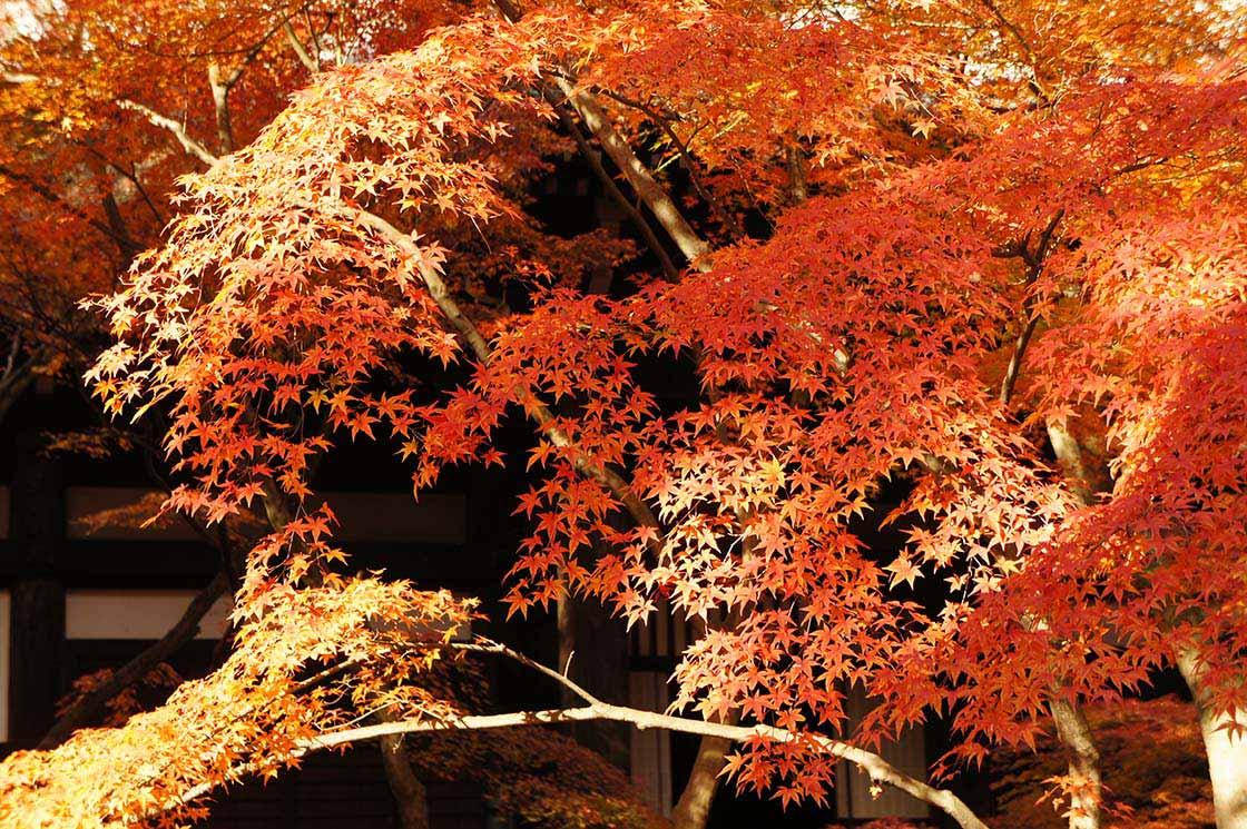 真如堂の紅葉