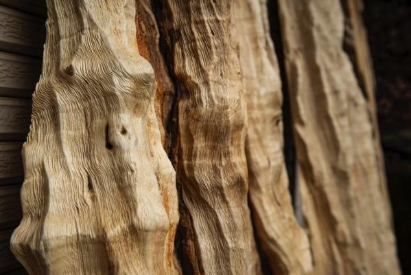 虫食いがあったり菌などが入ったり、有機体らしい姿の楓の木